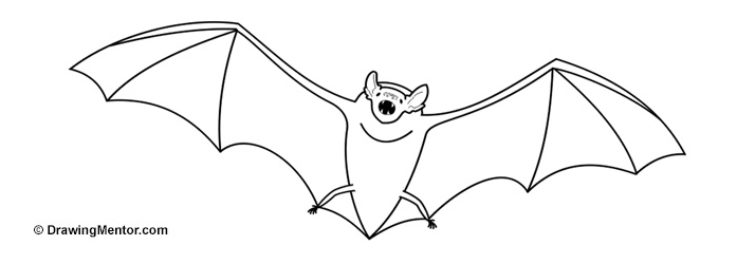 Vampire bat drawings images galleries for How to draw a small bat
