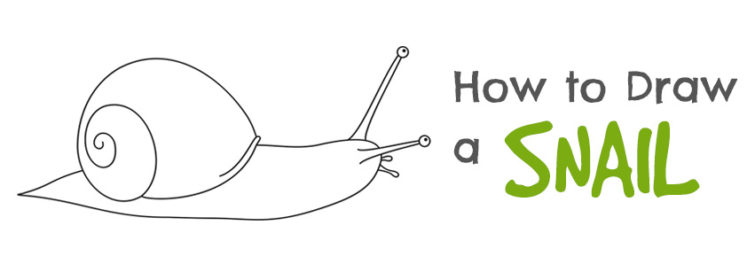 how to draw snails slugs