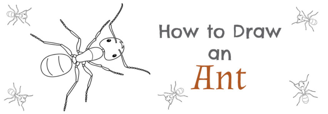 how to draw an ant step by step drawing tutorial