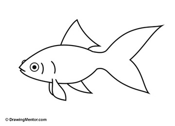 how-to-draw-a-goldfish