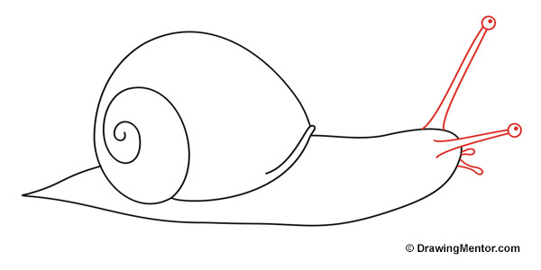 how to draw a snail
